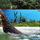 langkawi wildlife discount